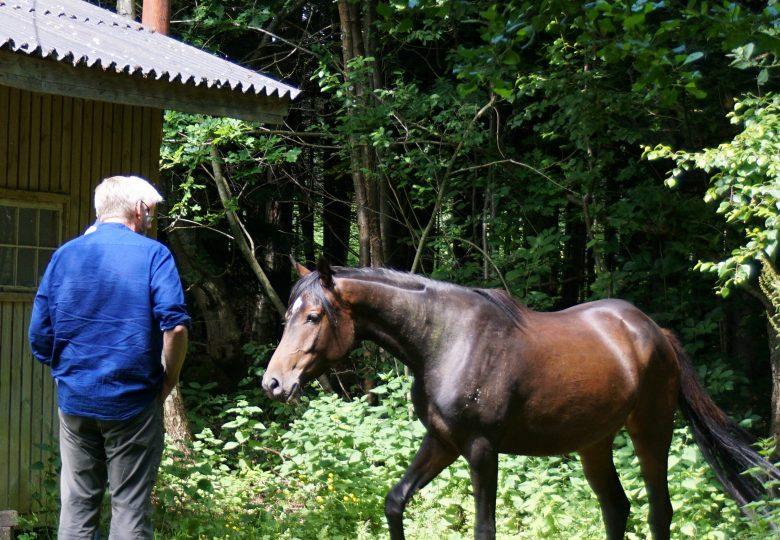 hesteassisteret mindfulness